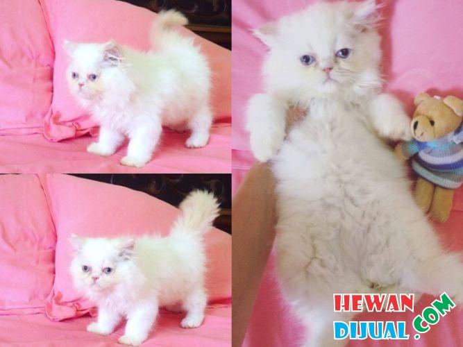 Gambar Kucing Warna Pink - Koleksi Gambar HD