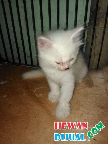 Download 95+  Gambar Kucing Jengkel Paling Baru