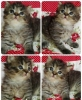 OPEN BOOKING ADOPT KITTEN PERSIA CUTE, SEHAT #4