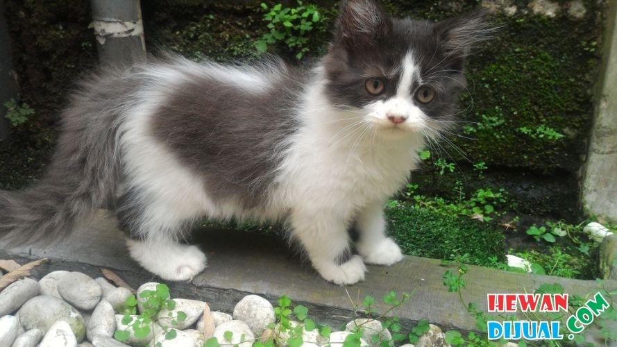 Gambar Anak Kucing Umur 3 Bulan Kucing Lucu